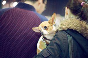 Fotografías de mascotas en Mercazoco